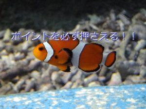 生物ブログ記事4